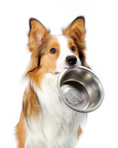 dog with empty bowl asking for food
